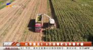 红寺堡区5.6万亩青贮玉米喜开镰-20210909