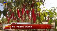 西吉:辣椒喜丰收 村民笑开颜-20211011