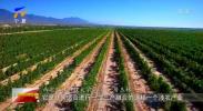 对话先行区·紫色梦想 |房玉林:挑战与机遇并存 综试区助推宁夏葡萄酒产业高质量发展-20211004