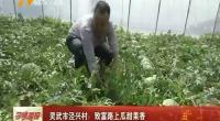 灵武市泾兴村:致富路上瓜甜果香-2018年5月26日