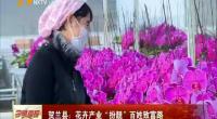 """贺兰县:花卉产业""""扮靓""""百姓致富路-181113"""
