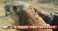 大奖娱乐_贺兰成功救助一只国家二级保护动物红隼-190119