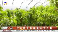 红寺堡区首届蟠桃节开幕-190420