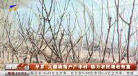 平羅:大櫻桃落戶廣華村 助力農民增收致富-191129