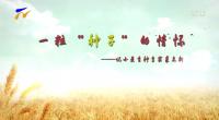 """一?!胺N子""""的情懷——記小麥育種專家裘志新"""