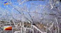 固原出現霧凇景觀-191129