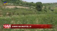 战彭阳两万亩红梅杏开园上市-200711