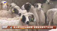 黃河銀行優化金融政策 助推鹽池灘羊產業發展-20201219