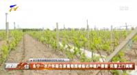 永宁一农户怀疑自家葡萄园被临近种植户侵害 民警上门调解-20210518