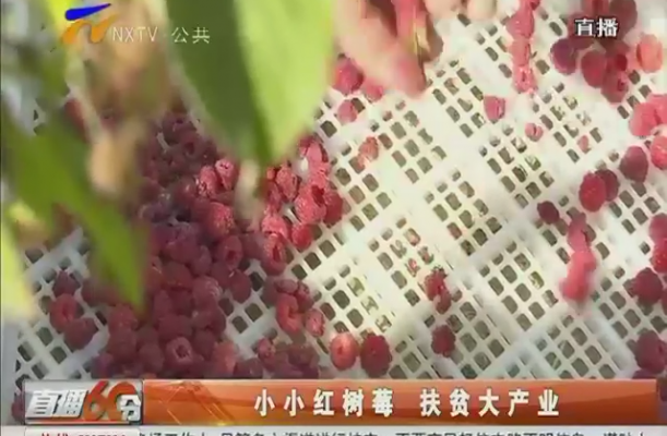 小小红树莓 扶贫大产业-2017年9月18日